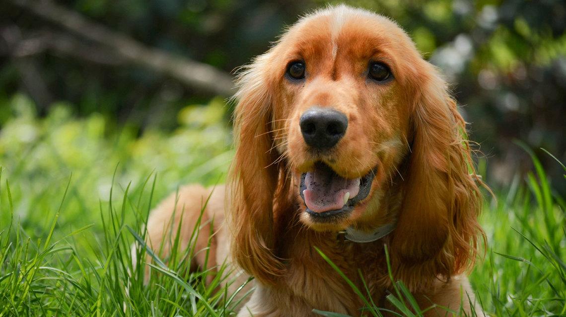 Ο Σκύλος που μου άλλαξε τη Ζωή