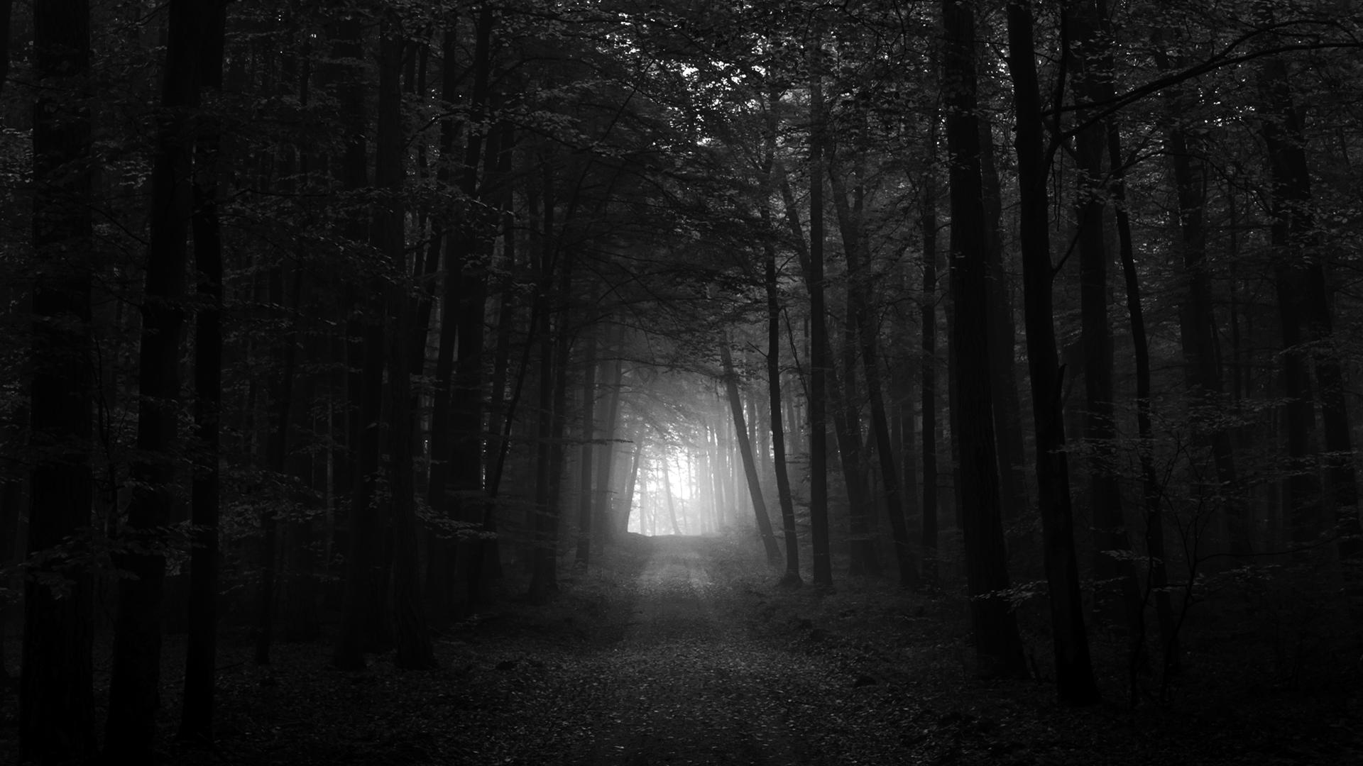 Το δάσος φοβίζει ακόμα