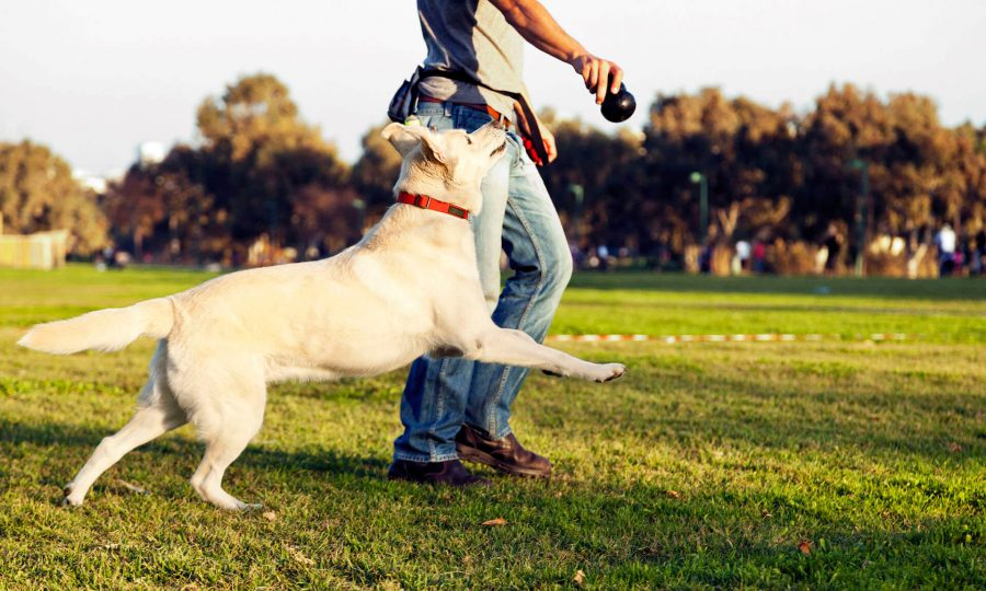 Καλοκαίρι στην Αθήνα με έναν σκύλο